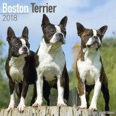 Kalender Boston Terrier 2018 - Avonside Publishing - voorblad