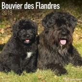 Kalender Bouvier des Flandres 2018 - Avonside Publishing - voorblad