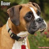 Kalender Boxer 2018 - Avonside Publishing - voorblad