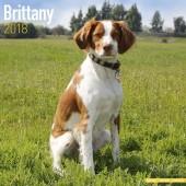 Kalender Epagneul Breton 2018 - Avonside Publishing - voorblad