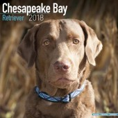 Kalender Chesapeake Bay Retriever 2018 - Avonside Publishing - voorblad