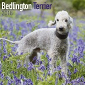 Kalender Bedlington Terrier 2018 - Avonside Publishing - voorblad