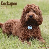 Kalender Cockapoo 2018 - Avonside Publishing - voorblad