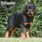 Kalender Rottweiler Puppies 2018 - Avonside Publishing - voorblad