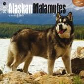 Kalender Alaska Malamute 2016