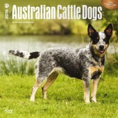 Kalender Australian Cattle Dog 2016