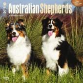 Kalender Australian Shepherd 2016