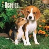 Kalender Beagle 2016
