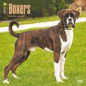 Kalender Boxer 2016
