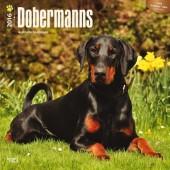 Kalender Dobermann 2016