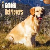 Kalender Golden Retriever 2016