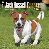 Kalender Jack Russell Terrier Puppies 2016