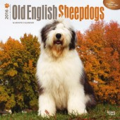Kalender Bobtail / Old English Sheepdog 2016