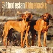 Kalender Rhodesian Ridgeback 2016