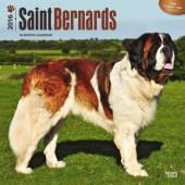 Kalender Sint Bernard 2016