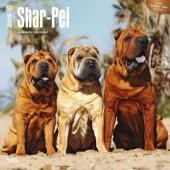 Kalender Shar-Pei 2016
