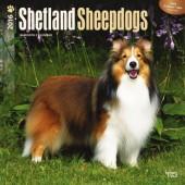 Kalender Shetland Sheepdog 2016
