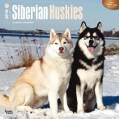 Kalender Siberian Husky 2016