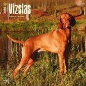 Kalender Hongaarse Staande Vizsla / Vizsla 2016