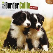 Kalender Border Collie Puppies 2016