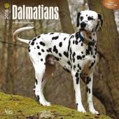 Kalender Dalmatische Hond 2016