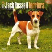 Kalender Jack Russell Terrier 2016