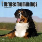 Kalender Berner Sennenhond 2018 - BrownTrout - voorblad