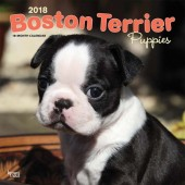 Kalender Boston Terrier Puppies 2018 - BrownTrout - voorblad