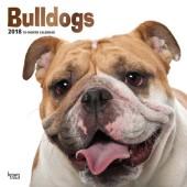 Kalender Engelse Bulldog 2018 - BrownTrout - voorblad