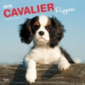 Kalender Cavalier King Charles Spaniel Puppies 2018 - BrownTrout - voorblad