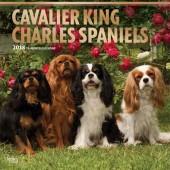 Kalender Cavalier King Charles Spaniel 2018 - BrownTrout - voorblad