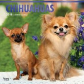 Kalender Chihuahua 2018 - BrownTrout - voorblad