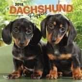 Kalender Teckel Puppies 2018 - BrownTrout - voorblad