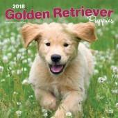Kalender Golden Retriever Puppies 2018 - BrownTrout - voorblad