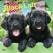 Kalender Black Labrador Retriever Puppies 2018 - BrownTrout - voorblad