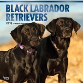 Kalender Black Labrador Retriever 2018 - BrownTrout - voorblad