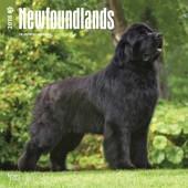 Kalender Newfoundlander 2018 - BrownTrout - voorblad