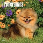 Kalender Pomeranian / Dwergkeeshond 2018 - BrownTrout - voorblad