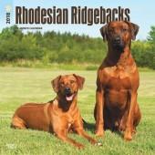 Kalender Rhodesian Ridgeback 2018 - BrownTrout - voorblad