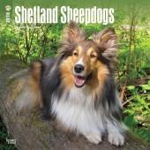 Kalender Shetland Sheepdog / Sheltie 2018 - BrownTrout - voorblad