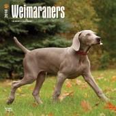 Kalender Weimaraner 2018 - BrownTrout - voorblad