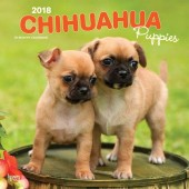 Kalender Chihuahua Puppies 2018 - BrownTrout - voorblad