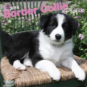 Kalender Border Collie Puppies 2018 - BrownTrout - voorblad