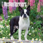 Kalender Boston Terrier 2018 - BrownTrout - voorblad