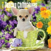 Kalender Chihuahua Teacup 2018 - BrownTrout - voorblad