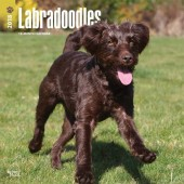 Kalender Labradoodle 2018 - BrownTrout - voorblad