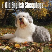 Kalender Old English Sheepdog / Bobtail 2018 - BrownTrout - voorblad