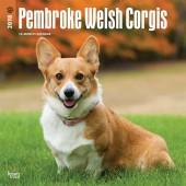 Kalender Welsh Corgi Pembroke 2018 - BrownTrout - voorblad