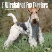 Kalender Fox Terrier Draadhaar 2018 - BrownTrout - voorblad