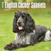 Kalender Engelse Cocker Spaniel 2018 - BrownTrout - voorblad
